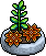 Orange Succulent Plant.png