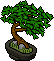 Chinese Banyan Bonsai.png