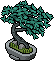 Spruce Bonsai.png