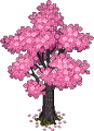 Sakura Tree.png